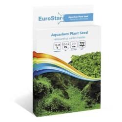 Eurostar - Eurostar Bitki Tohumu Hemıanthus Callıtrıchoıdes (1)