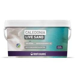Reeflowers - Reeflowers Caledonia Live Sand Purple 18Kg