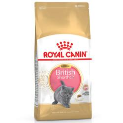 Royal Canın - Royal Canin British Shorthair Kitten 2 Kg.